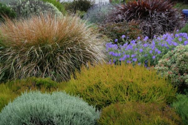 Consejos para cuidar tu jardín junto al mar