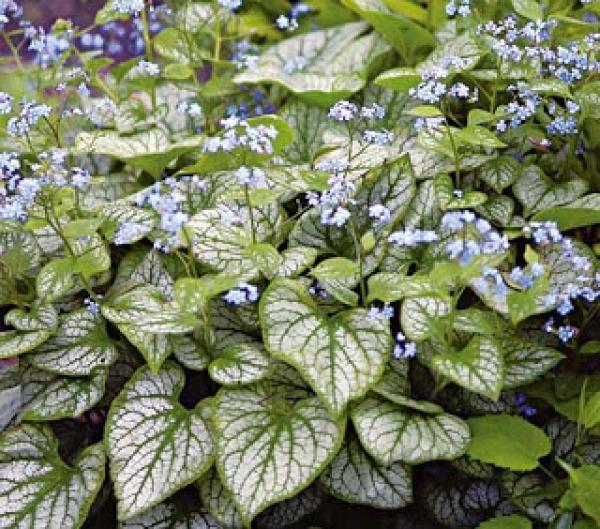 Plantas de jardín resistentes al frío